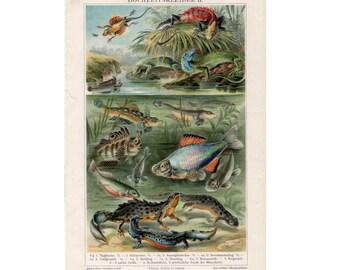 1889 ANTIQUE REPTILE LITHOGRAPH amphibian scene original antique lizard print