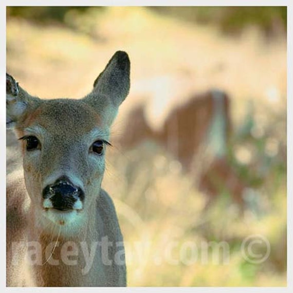 Deer Photograph, Rustic Decor, Fall, Brown, Olive Green, Tan, Nature Photography, Cabin, Lodge, Wall Art