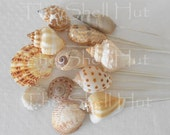 Seashell Bridal Bouquet Shell Picks Beach Wedding Party Flower Arrangement Flower Pics Inserts Nautical MixTropical Seaside Coastal