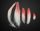 Flamingo feathers - about 4-17cm, 5pcs