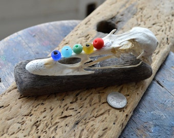 SEA BEAD SKULL - Rainbow Sea Worn Glass Beads - Found Duck Skull - Driftwood Base - Scottish Sea Glass (4478)