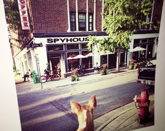 Original 8 by 8 photo on 14 by 14 paper spyhouse coffee house shop coffee shop art dog art