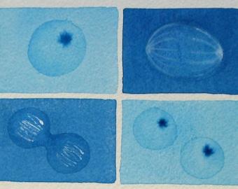 Mini Blue Cell Cycle  - original watercolor - Mitosis