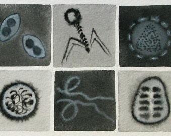 Black and White Viruses  - original watercolor of microbes