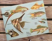 Recycled Notebook - Small Refillable Notepad - Types of Fish - Upcycled Children's Book