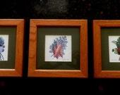 set of 3 Framed and Matted VEGETABLE PRINTS, Kitchen decor