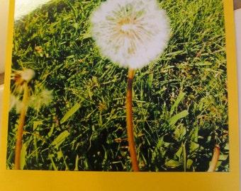 Instagram Photo Card -- Dandelion -- Bright Yellow Card -- Greeting Card -- Blank Inside