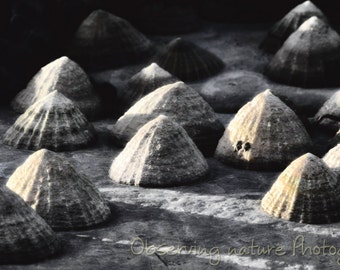Limpets Fine Art Photography Download
