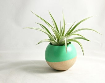 Sphere Succulent Air Plant Planter // Spearmint  + Wood