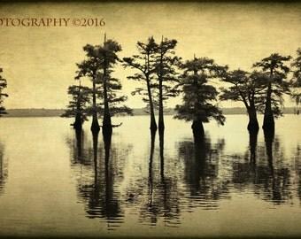 Fine Art Photography Rustic Home Decor Caddo Lake Swamp Sepia Texas Natural Lake
