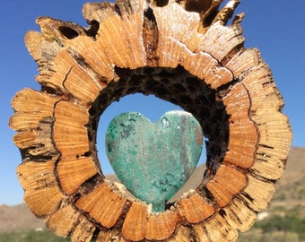 Cholla Wood  - Heart of Stone -  Turquoise  - AZ DAN ORIGINAL - Home of the Wild Spanish Mustangs