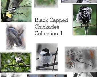 12 Pc 4x5 Handmade Cards- Black Capped Chickadee Collection 1