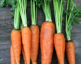 SALE! Nantes Coreless Heirloom Carrot Rare Seeds
