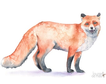 Fox print of watercolour painting, F8216, A4 size medium print, Fox watercolor painting, fox print, woodland animal painting