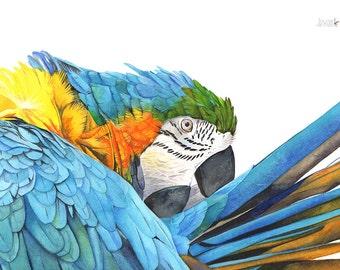 Macaw Watercolor Painting - Bird Art - Print of watercolor painting A4 Size wall art print, bird art print M2014, parrot watercolor painting