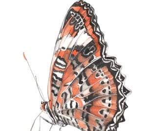 Butterfly Original watercolor painting. butterfly watercolour painting original art. nature wall art. Butterfly painting original.