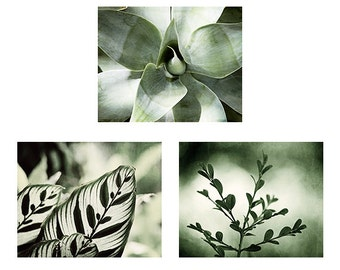 Green Nature Picture Set, Green Photography Prints, Green Botanical Wall Art, Leaf Picture, Branch Photo, Leaves Photography Green Decor