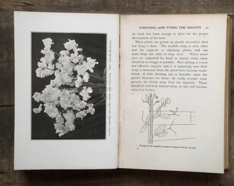 1920s gardening book Sweet Peas for Amateurs by Norman Lambert and H. H. Thomas