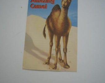Vintage Pamphlet Meet the Amazing Camel.. Bethel Church San Jose, CA