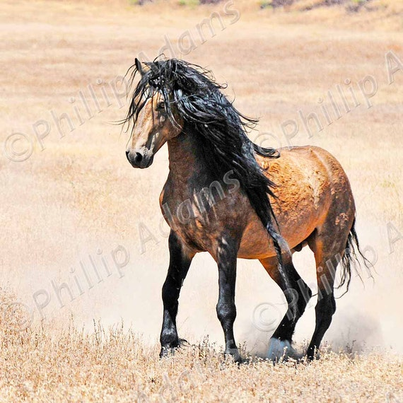 """Mesteño 6 - Mustang Stallion - 8"""" x 8"""""""
