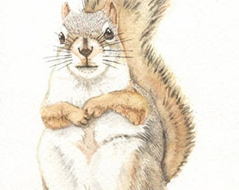 Squirrel, Original watercolor painting, 5x7, dromedary, art & collectibles, painting  earthspalette