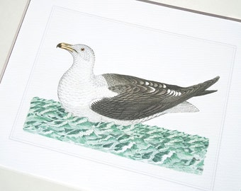 Bird Print 1 of Sea Bird Sea Gull on Blue Green Water Archival Print on Watercolor Paper