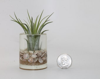 Mini Seashell and Resin Air Plant Holder . Air Plant Continer . by Lori Davidson