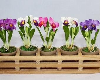 Mini Handmade Clay Cattleya  Orchids