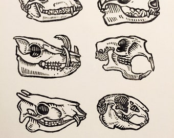 Skull Study no. 1 - Rubber stamps on paper - Kathleen Neeley