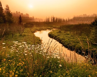 Wild flowers, Landscape, Golden Sunrise, Nature, Photography, Metallic paper, Metal Print, Vivid Metal, 5x7, 8x12, 16x24, 24x36
