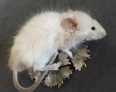 Clutching Taxidermy Mouse Brooch