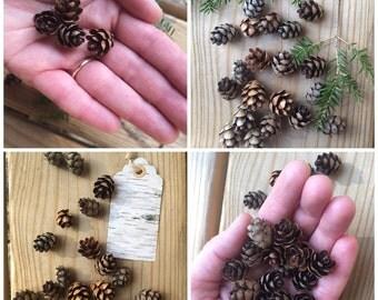 Mini Pinecones, Hemlock Tree Pinecones, 50 Pieces, Crafts, Rustic Decor, Supplies, Woodland, Rustic Wedding