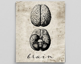 Brain Print Vintage Brain Poster Human Anatomy Poster Anatomy Art Anatomy Print Graduation Gifts for Doctors Science Art Science Poster
