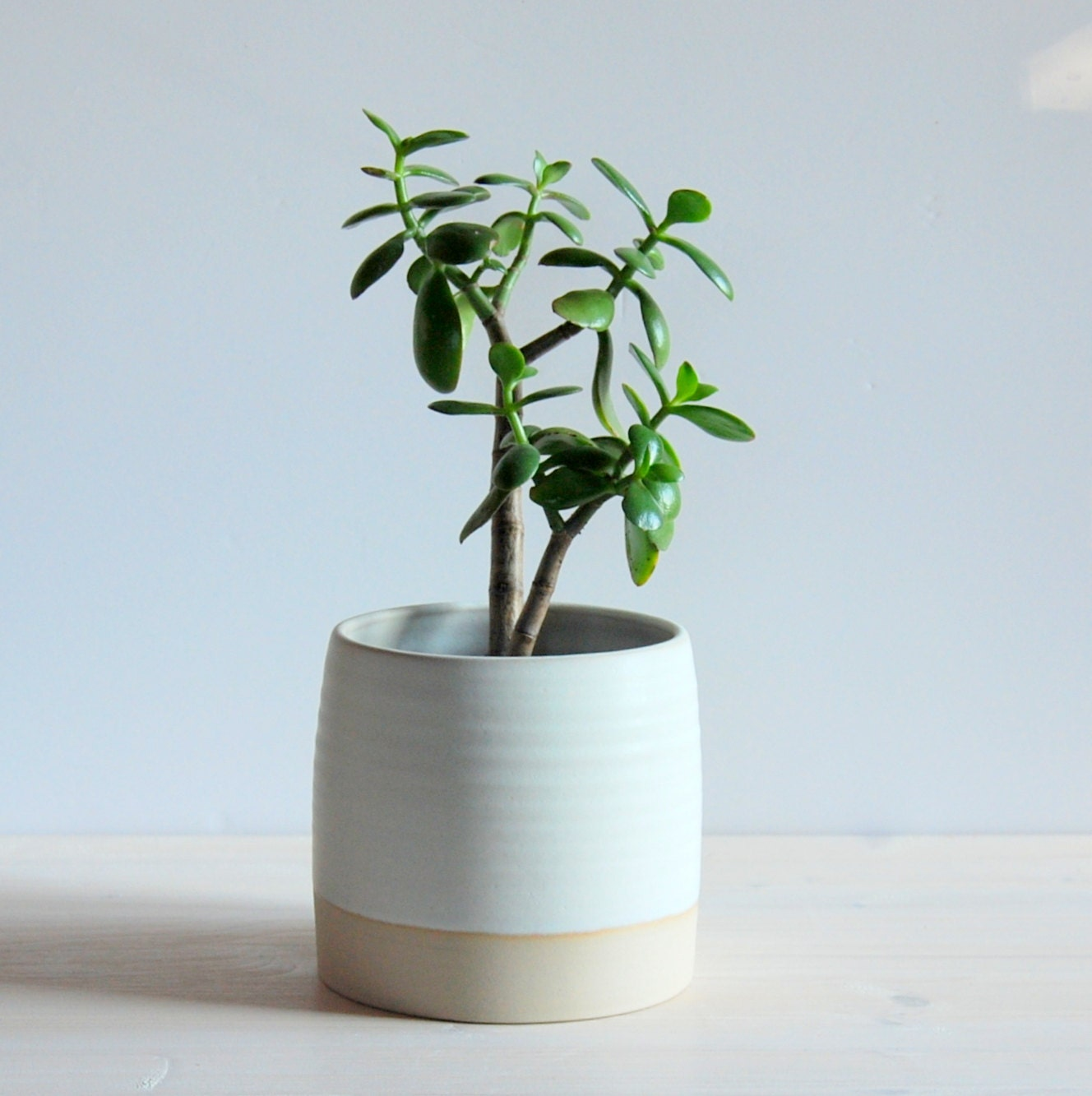 Indoor Plant Pot Stoneware Plant Container Plant Holder