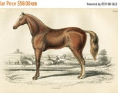 SALE Antique Hand Coloured Bookplate Color Book Plate Print Engraved Jardine 1840 Naturalists Mammalia HorsesEclipse Horse Plate 9