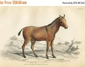 SALE Antique Hand Coloured Bookplate Color Book Plate Print Engraved Jardine 1840 Naturalists Mammalia Horses Yo To Tze Horse Plate 17