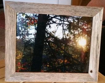 CaptureMoments!  Sunshine through the Trees :)
