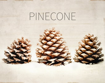 Winter Photography - Woodland - Holiday - Pine Cone - Rustic Holiday Art - Nature Photography - Winter - Typography