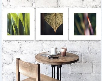 A set of 3 Botanical Fine art photography Abstract Nature fine print Olive Green Color Leafs pictures Square Modern wall prints Three art