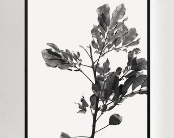 Nature Photography, Leaf Art, Nature Prints, Botanical Art, Minimalist Nature, Modern Natural Photography, Black and White Leaves, Outdoor