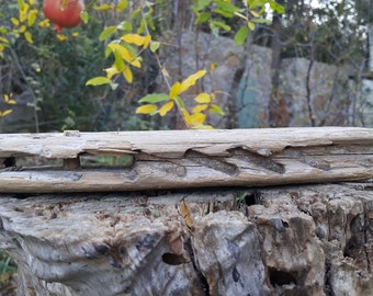 Rare driftwood from Aegean Sea