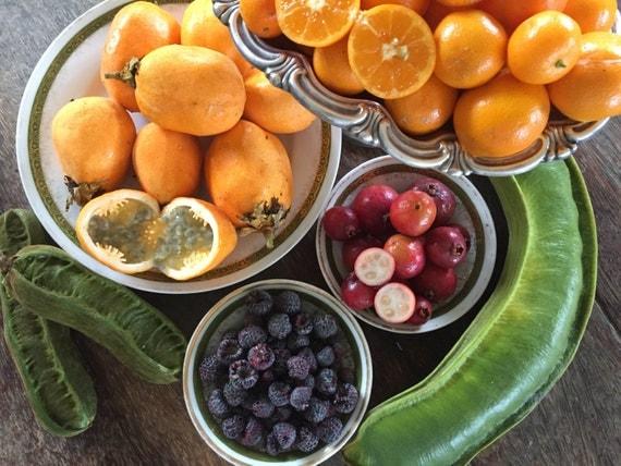 how to grow hawaiian guava