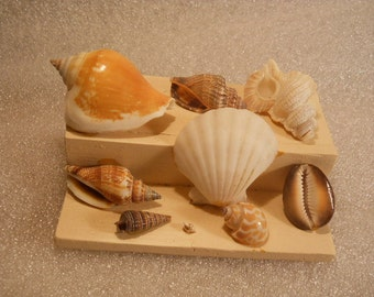 Wood Hand Made Crafted Table Top Decoration with Real Shells no#5