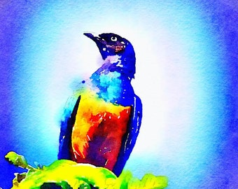Superb Starling Watercolor Print