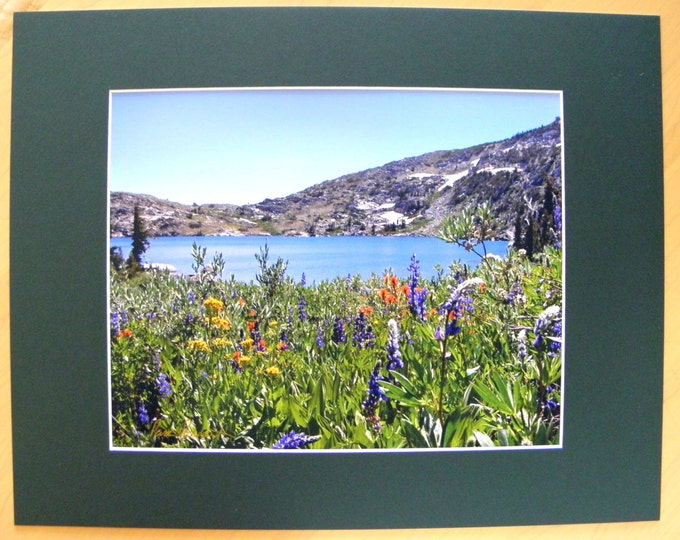 WILDFLOWER PHOTOGRAPHIC DECOR created by Pam Ponsart of Pam's Fab Photos