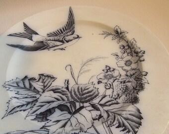 Vintage Transfer Ware Plate Swallow G & S Bird Aviary