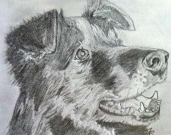 Custom Pet Portrait in Pencil
