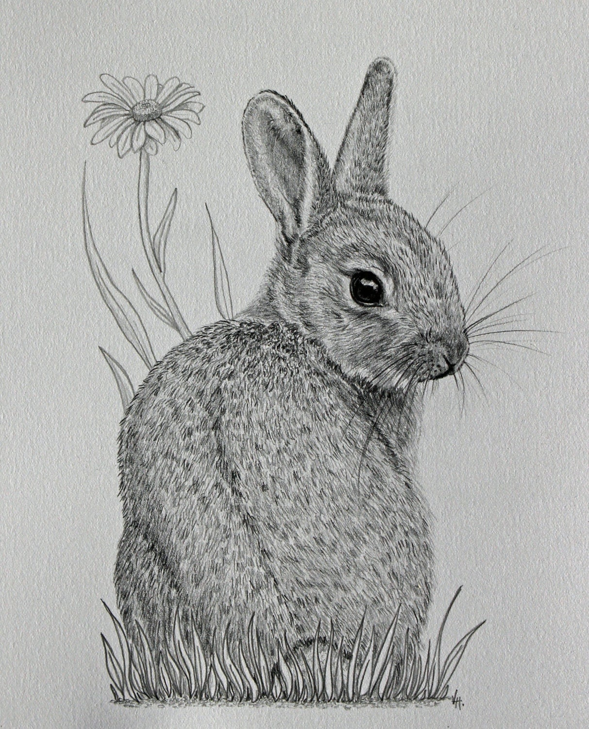 original mounted pencil drawing of baby bunny rabbit with