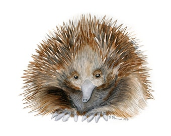 Baby Echidna Art - Australian Nursery Decor - Baby Animal Print - Australian Animal - Outback Nursery - Animal Art - Echidna - Baby Girl