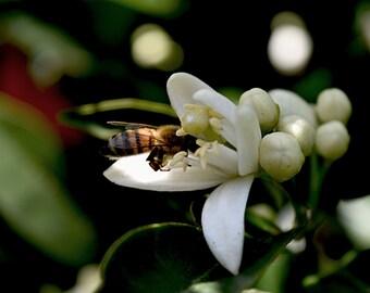 Honey Natural, Orange honey, Pure honey From Orange flowers, Wonderful flavor, honey favors, 300gr